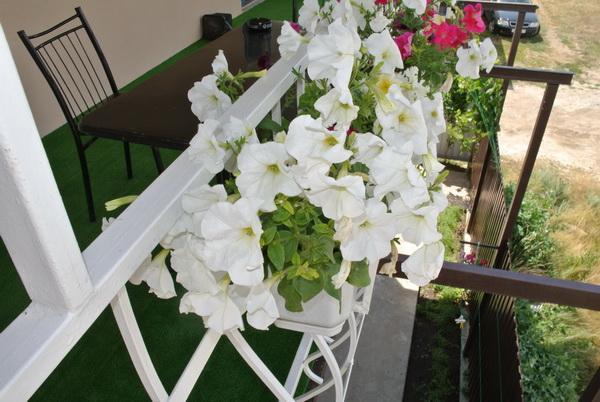 Частный коттедж отдыха «NaDin» на курорте Катранка. Фото № 10395