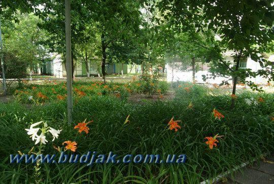 lebedevka_bo_energetik_09.jpg