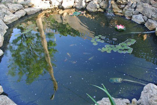 Пруд на базе отдыха Одиссей (курорт Лебедевка)