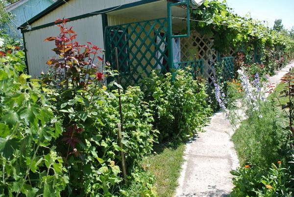 Территория базы отдыха «Приморск-2» на курорте Приморское